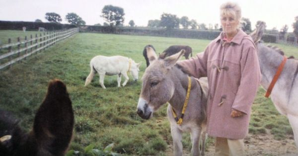 Video: This British couple is happily retired in India, running a donkey healthcare centre