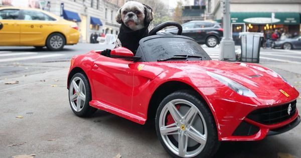 Video: This New York dog has a luxury car collection all to himself