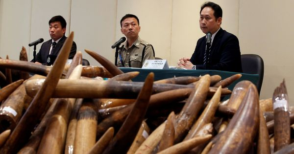 China enforces complete ban on ivory trade