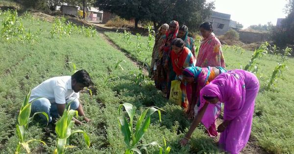 How crop diversification helped marginal farmers in Maharashtra's Solapur turn their lives around