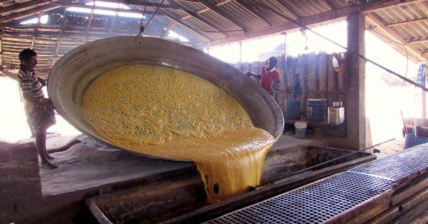 In this Tamil Nadu village, making jaggery is a family affair