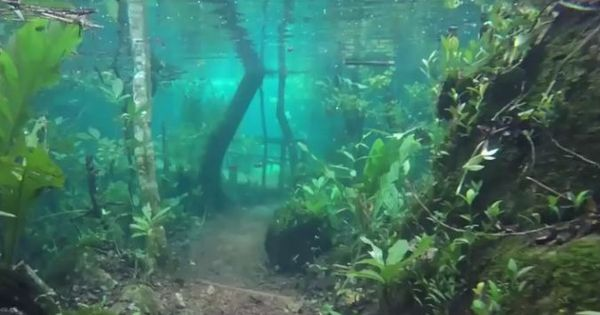 Watch: A Brazilian hiking trail turned into an underwater paradise after heavy flooding