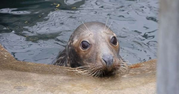 Video: A seal wounded by a frisbee makes a happy return to the North Sea