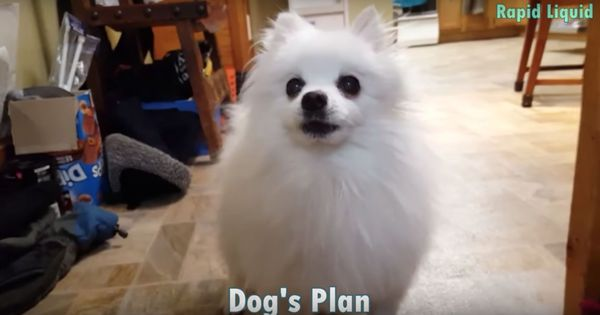 'Dog's plan': Drake's song gets a Pomeranian makeover with this parody
