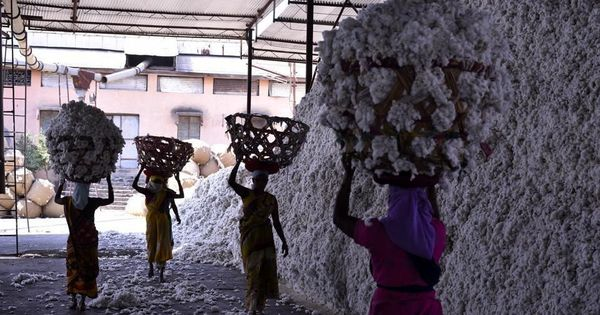 Thousands of Maharashtra farmers commit suicide each year. What happens to their families?