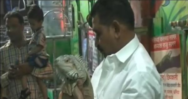 Watch: This shopkeeper from Indore has got himself two rare pets – a pair of iguanas