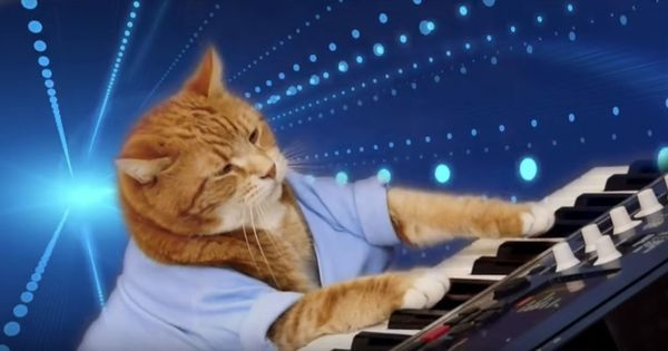 Watch: The internet is mourning the loss of the famous Keyboard Cat, who has died at the age of nine