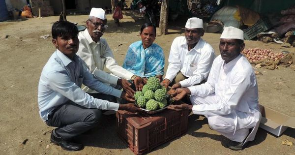 In Maharashtra, one village has found prosperity in custard apples