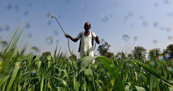 Indian farmers spray a deadly cocktail of pesticides because government lacks staff to guide them