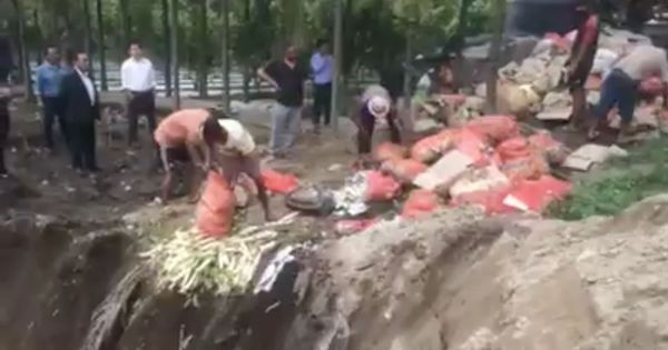 Watch Sikkim officials bury 10 tonnes of edible vegetables. Because they were 'inorganic'