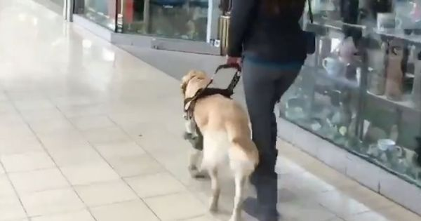Watch: This woman's guide dog sneakily leads her to his favourite store when they're out shopping