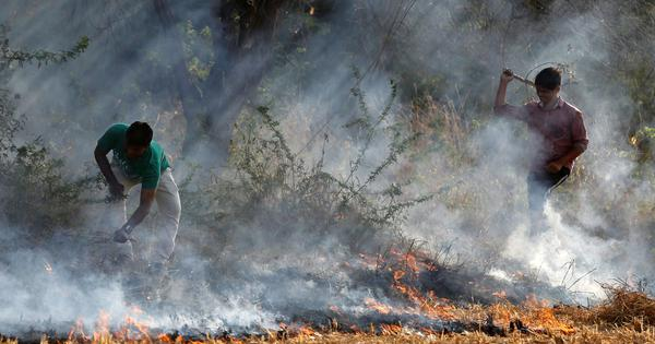 Air pollution from crop burning costs North India over $30 billion annually, finds study
