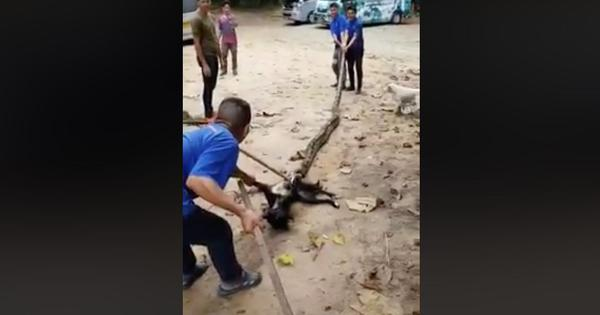 Watch: A python was crushing a dog to death. Thankfully, (unmasked) crusaders came to its rescue