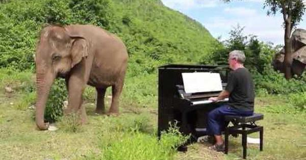 Watch: This video of a blind elephant swaying to classical music on the piano will move you