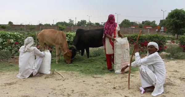 Jobs for some, land lost for others: How new universities have changed lives of Sonipat's villagers