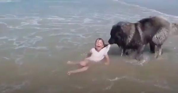 Watch: Dog thinks a girl is drowning and saves her in the most adorable way