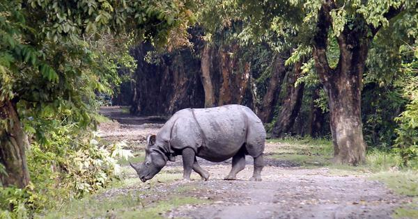 In Assam, a beloved wandering rhino was killed and the forest department tried to 'hush it up'