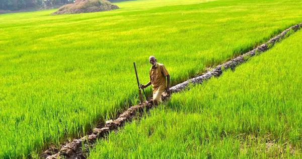 A group of farmers is working to bring paddy cultivation back to Kerala by tapping into fallow land