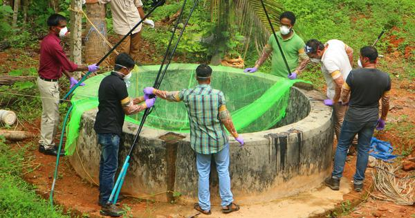 Kerala: Insectivorous bats did not spread Nipah virus, researchers find at ground zero of outbreak