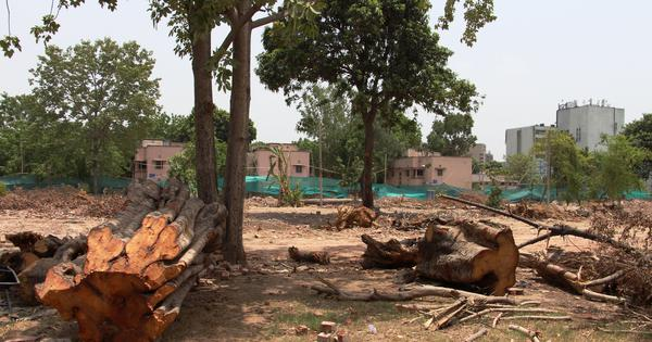 Opinion: Why felling of thousands of trees for South Delhi redevelopment project must be reviewed