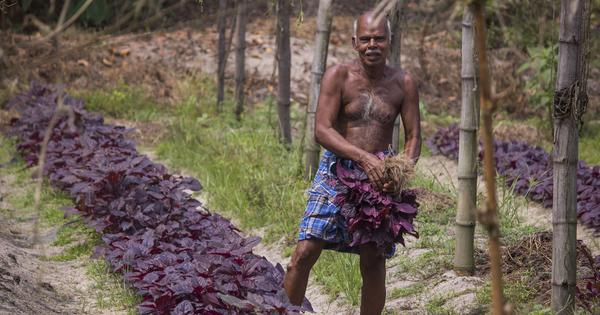 Long before urban hipsters, a panchayat in Kerala had discovered the benefits of organic vegetables