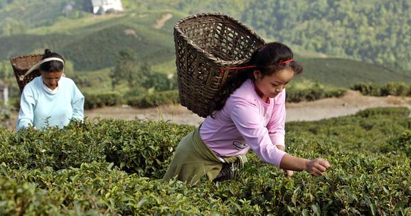 Six decades ago, a workers' uprising changed Darjeeling's tea gardens. It's time for change again