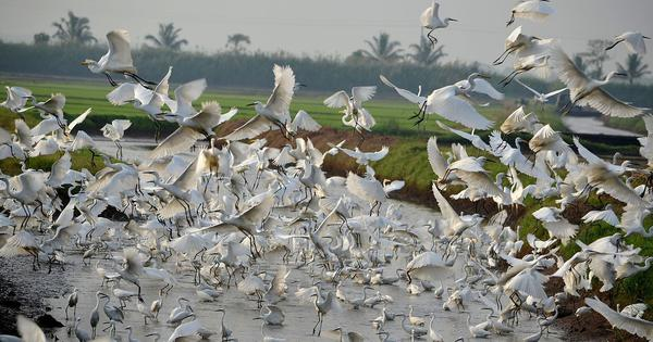 Kole Birders: Citizen scientists in Kerala are helping build an atlas of the country's bird species