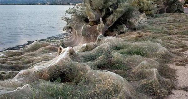 Watch: The seashore in this Greek town is covered in hundreds of yards of spider webs