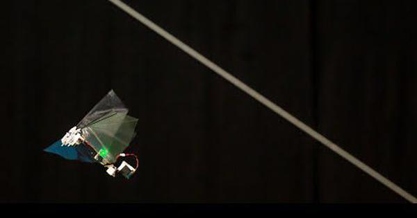 Watch: This flying robot can mimic the speed and agility of fruit flies