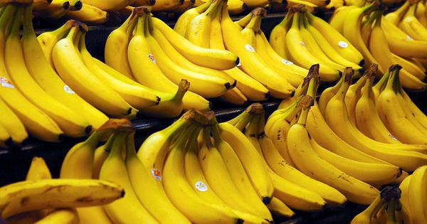 Fruit for thought: Bananas are at risk of dying out again – here's how we can try to save them