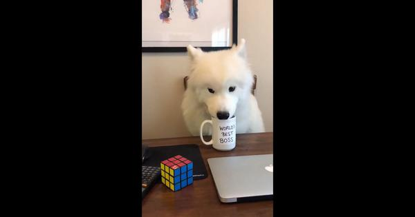 Watch: 'The Office' opening credits sequence starring a dog will melt your heart