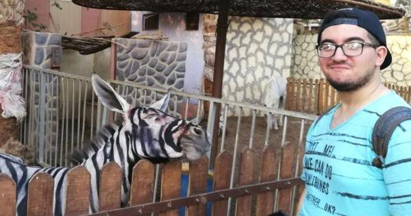 Egypt: Cairo zoo allegedly paints stripes on donkey to make it look like a zebra