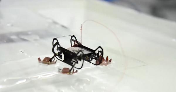 Watch: Harvard's new robotic cockroaches can survive underwater forever