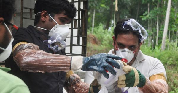 Medical council confirms fruit bats as source of Nipah infections in Kerala, says report
