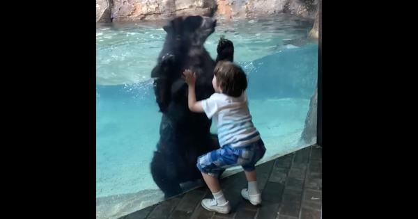 An endearing video of a little boy and a bear jumping in unison is spreading joy on the internet