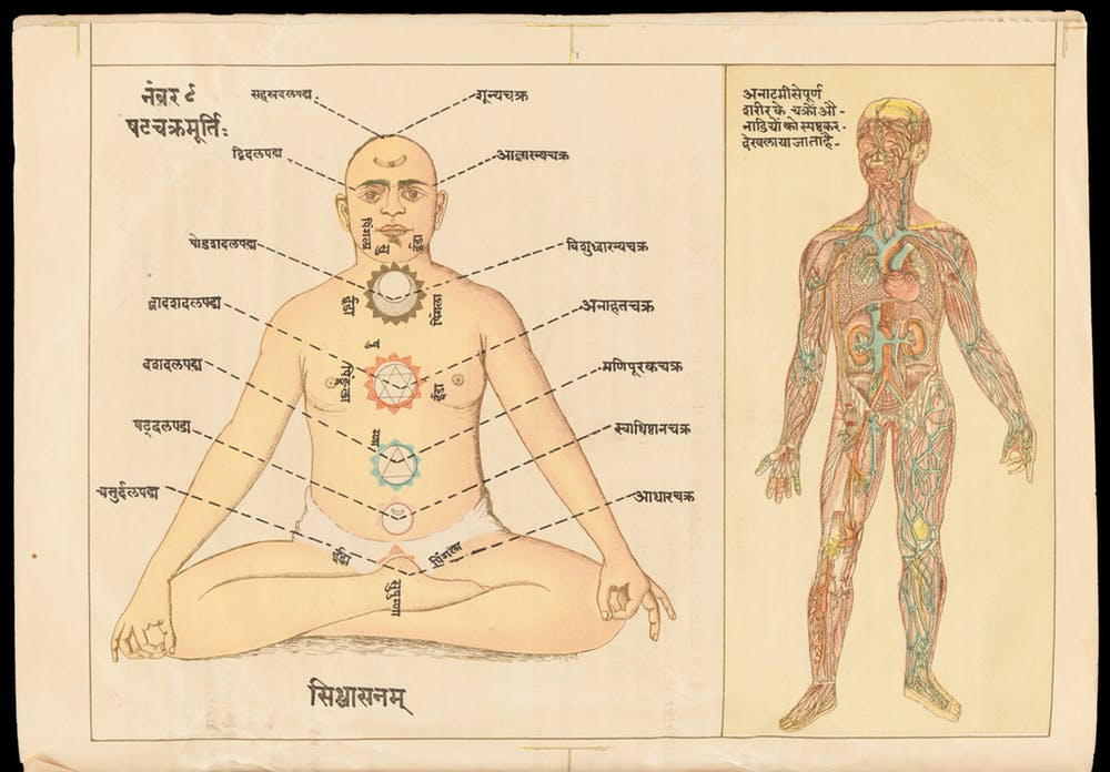 Parallels between the yogic and the medical/anatomical view of the body. Image credit: Wellcome Collection, Svami Hamsasvarupa, Sanskrit MS 391 [Licensed uder CC BY 4.0]