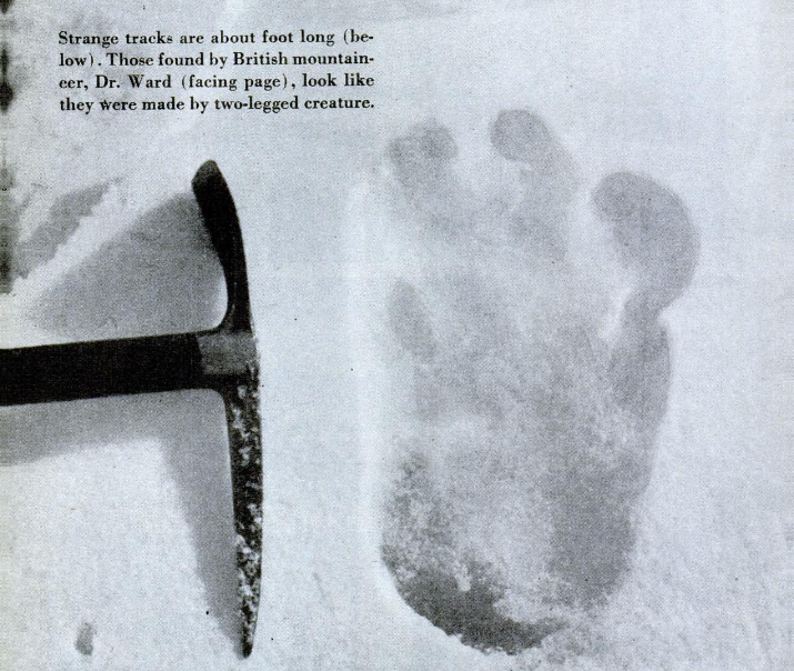 Photograph of an alleged yeti footprint found by Michael Ward. Photograph was taken at Menlung glacier on the Everest expedition by Eric Shipton in 1951. Photo credit: Gardner Soule/Wikimedia Commons [Licensed under creative Commons]