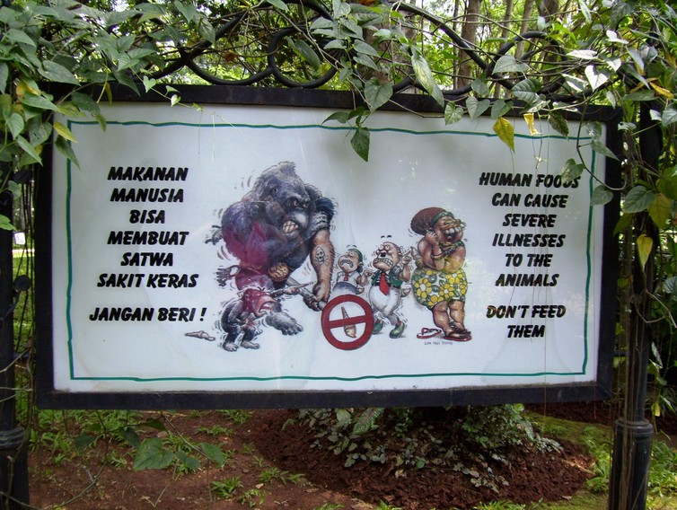 A sign in Indonesia warns tourists not to approach apes. Serenity/Wikimedia, CC BY-SA
