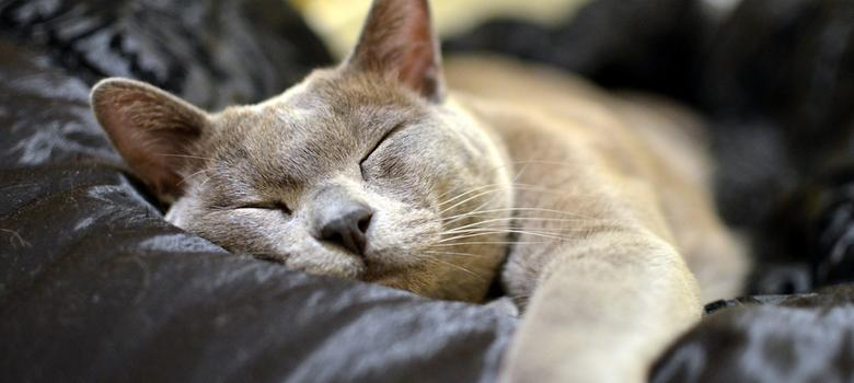 Cat lovers rejoice: watching online videos lowers stress and makes you happy