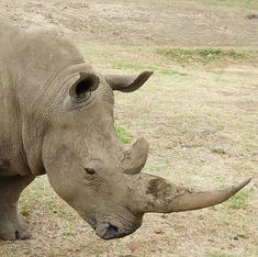 Chopping off the rhino's horn and the war on wildlife crime