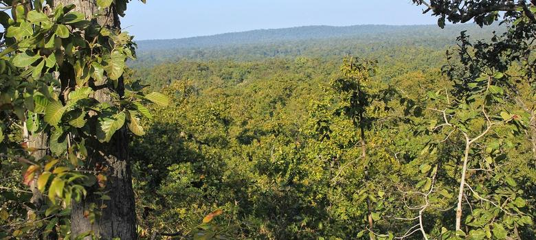 As coal auctions begin in Delhi, a splendid forest in Chhattisgarh awaits slow death