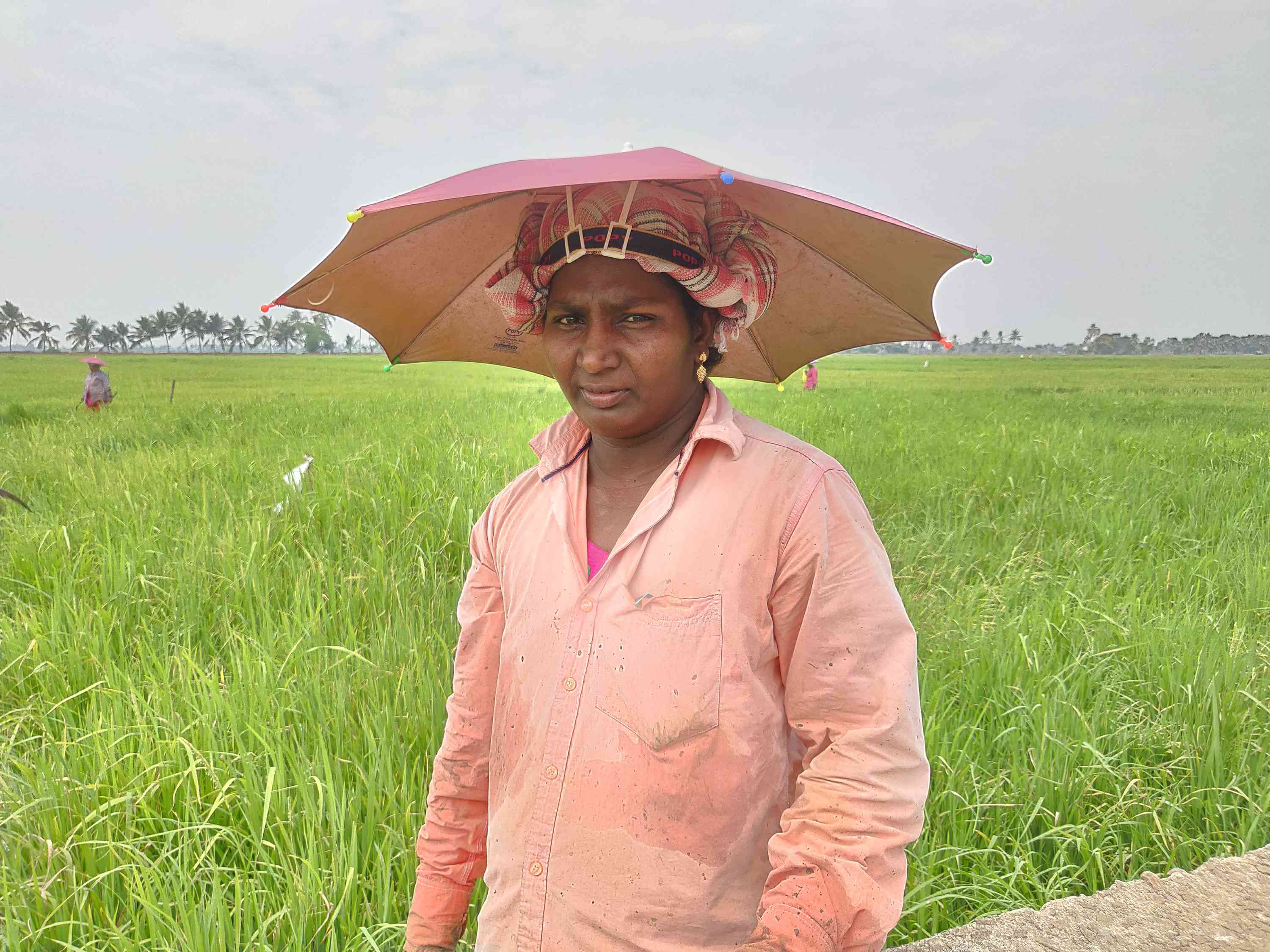 KK Sanal Kumar's widow Lavanya in a paddy field in Peringara. Photo credit: TA Ameerudheen