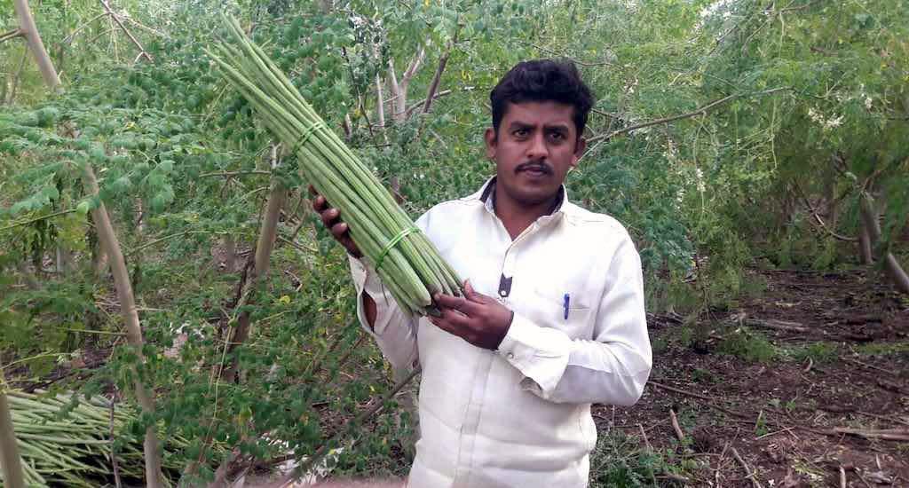 moringa farming