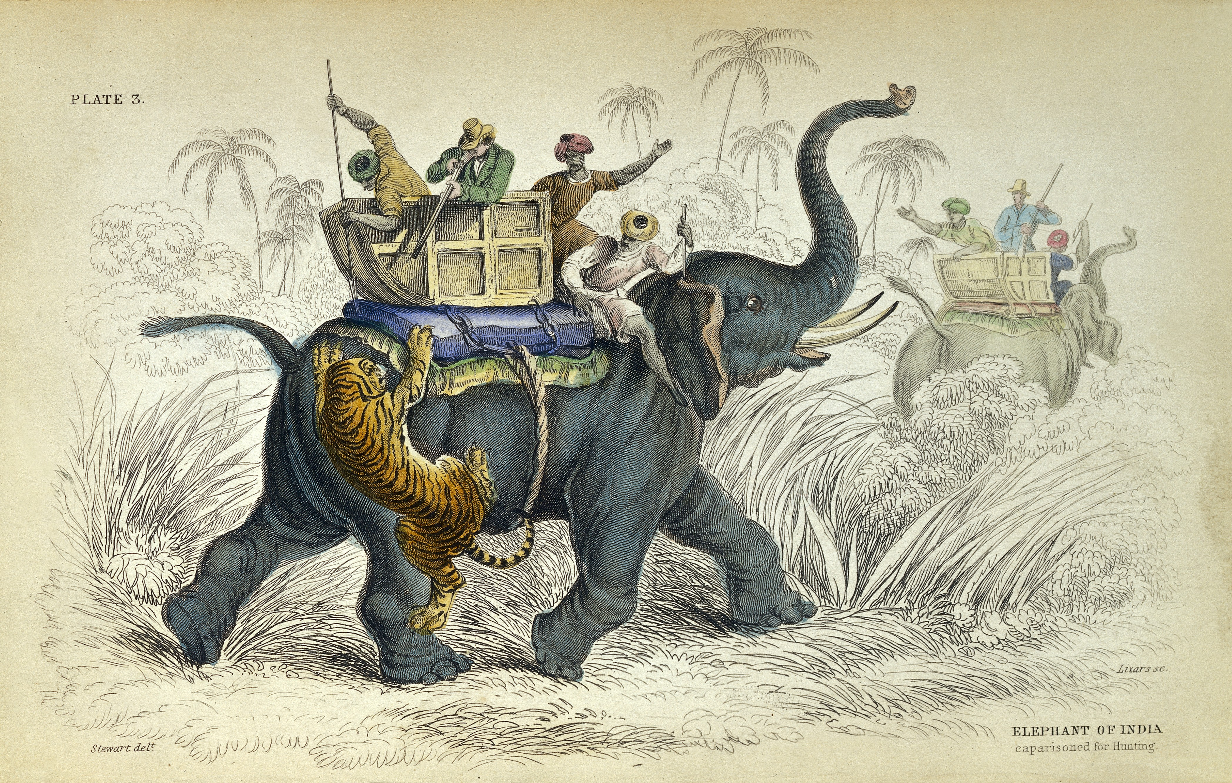 W Jardine, Natural History of Pachydermes | Wikimedia Commons (Licensed under CC by 4.0)