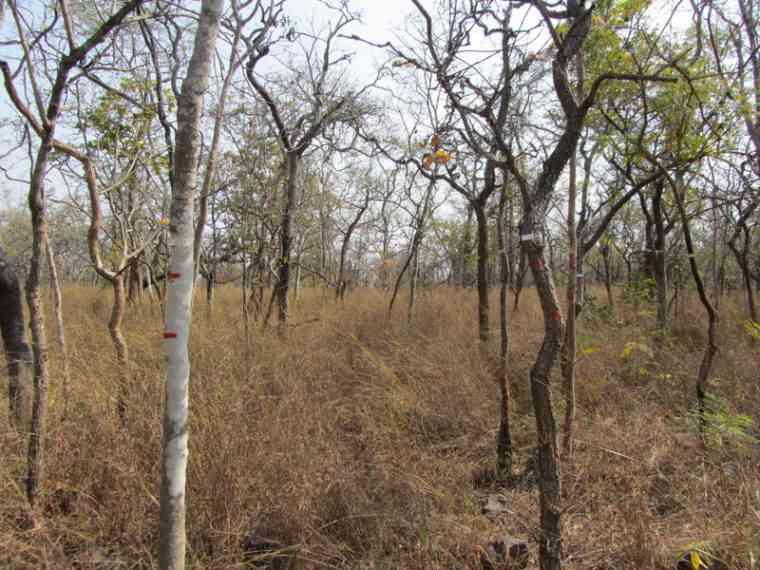 The Nagarjunsagar-Srisailam Tiger Reserve. Photo credit: Swapna Nelaballi.