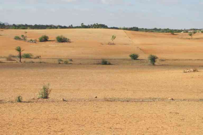 Absence of soil and water conservation measures in Muttala, Anantapur district Andhra Pradesh leads to desert. Photo credit: S. Dharumarajan