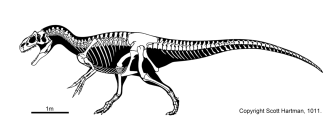 Allosaurus. Source: Scott Hartman, Author provided