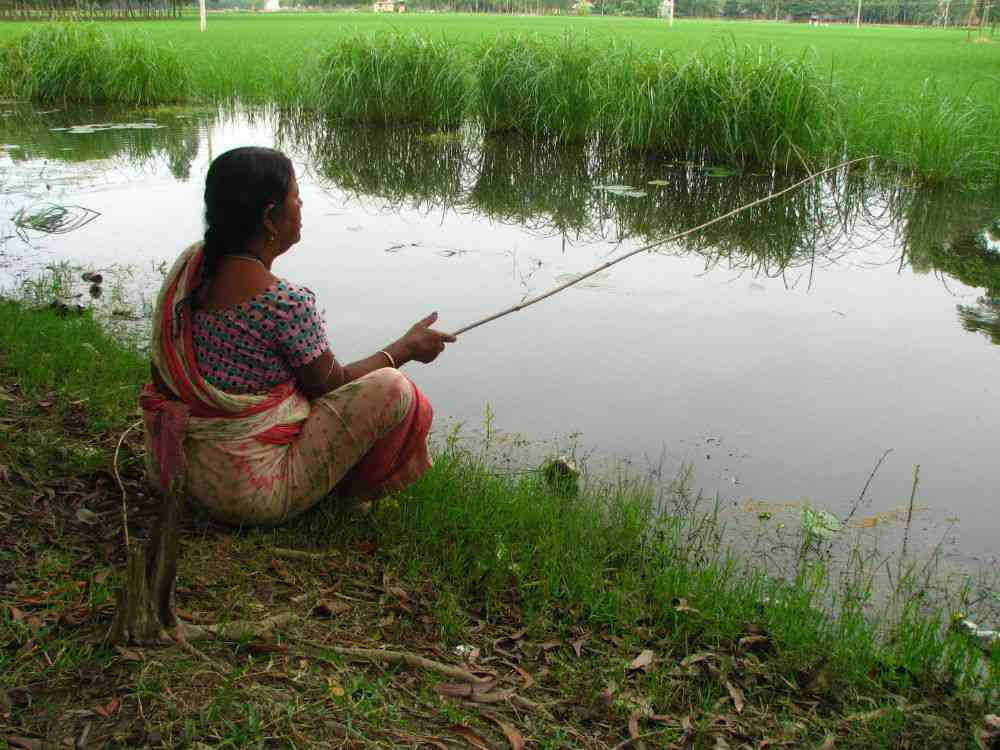 Fishing in the waters of the paddy fields. Photo credit: Moushumi Basu.