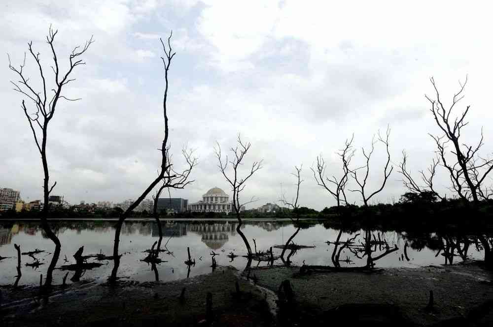 The mangrove plantations between Belapur and Belpada in Navi Mumbai have been under threat for the last few years. Activists have blamed the threat on the plastic and concrete waste that is dumped illegally in the plantations. In this photo, part of a dead mangrove plantation is captured near the Navi Mumbai Municipal Corporation headquarters, Belapur. Photo credit: KK Choudhary/The Times of India.