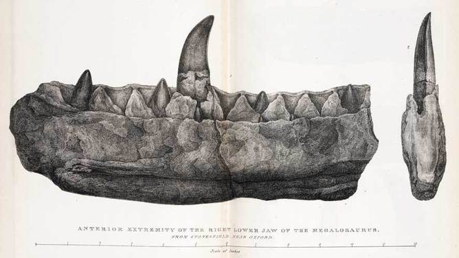 Megalosaurus jaw Buckland. Source:Author provided